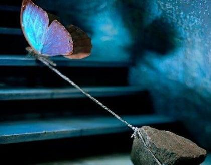 돌을 끌어올리는 나비