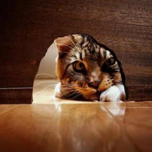 호기심은 고양이를 죽이지 않았다. 오히려 강하게 만들 뿐...