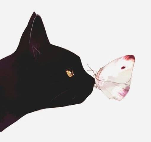 고양이 나비