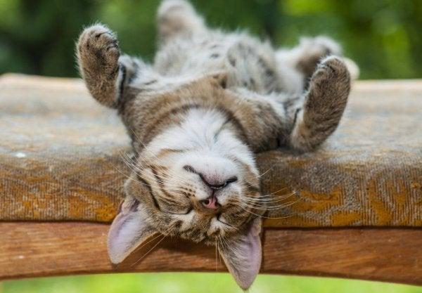 낮잠의 4가지 심리적 혜택