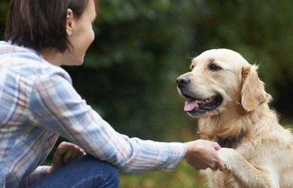 개들은 어떻게 얼굴을 알아볼까?