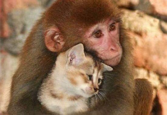 동물을 사랑해 본 적이 없다면 제대로 산 것이 아니다