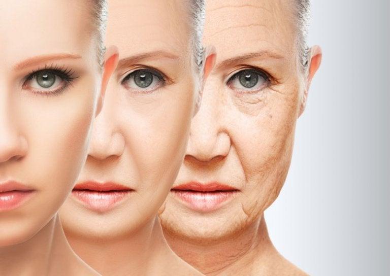 노화: 뇌 기능을 향상시키는 영양소