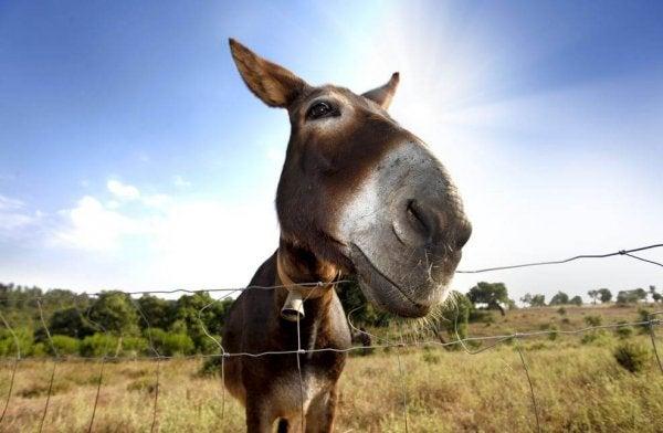 뷔리당의 당나귀: 어떤 사람들은 뷔리당의 당나귀와 같다