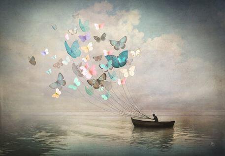 나비와 배
