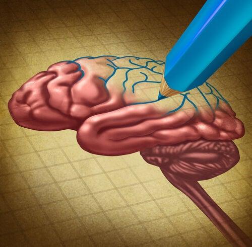 뇌의 성장
