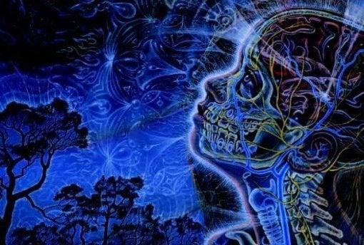 솔방울샘: 뇌 이미지