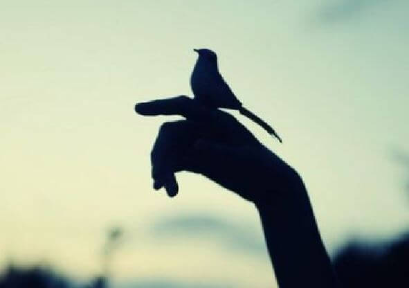 손 위의 새