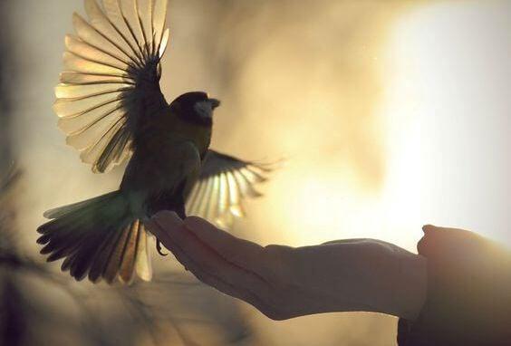생각할 때 날아오르는 새