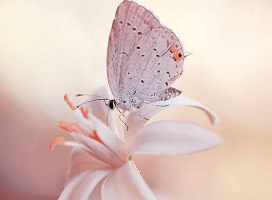 꽃과 나비: 모든 것을 흘려보내라