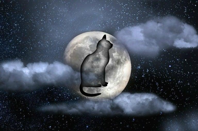 고양이 밤-765x508
