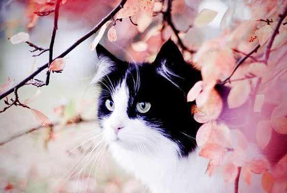 점박이 고양이와 제비 시나 이야기