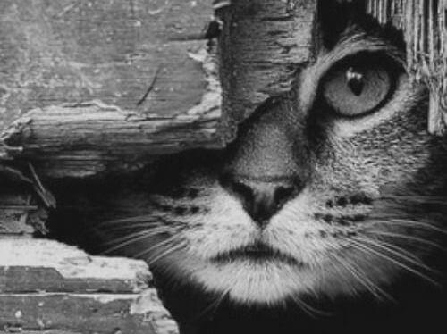 점박이 고양이와 제비 '시나' 이야기