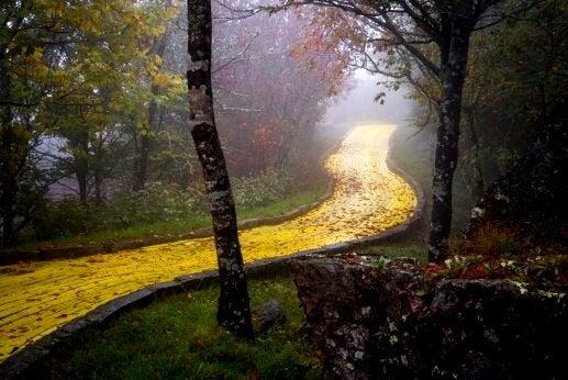 황금빛의 길