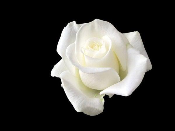 소피 숄: 하얀 장미로 히틀러에게 대항한 여인