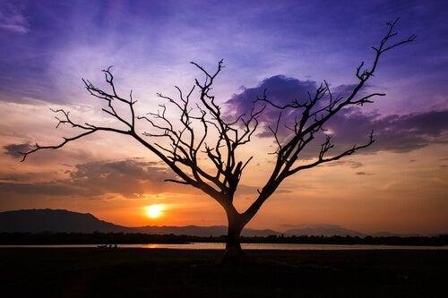 노을진 나무: 아무것도 남지 않았지만, 평화를 발견했다