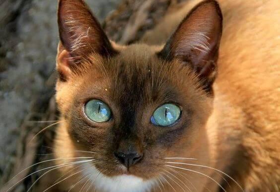 동물의 눈에는 독특한 언어가 담겨있다
