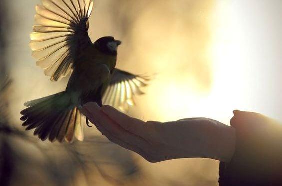 새를 얹은 손