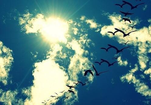 하늘의 새