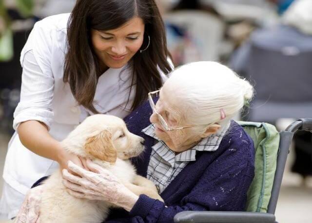 개와 할머니