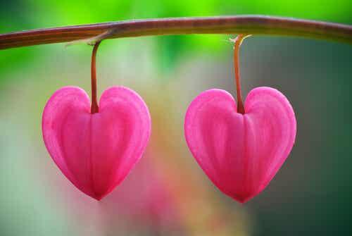 사막 속의 꽃: 사랑을 깨닫는 것에 대한 교훈