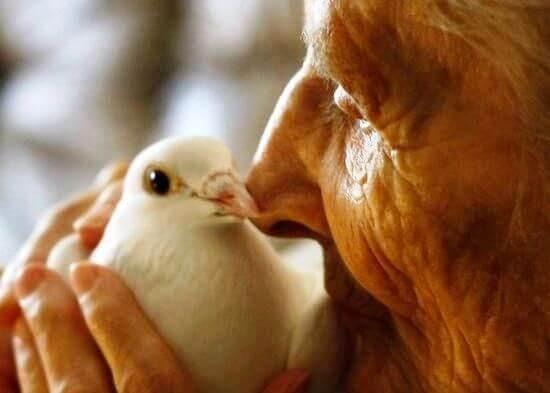 늙은 여자와 새