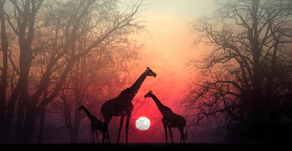 잠시 멈춰 영혼에게 시간을 주자: 아름다운 아프리카의 이야기