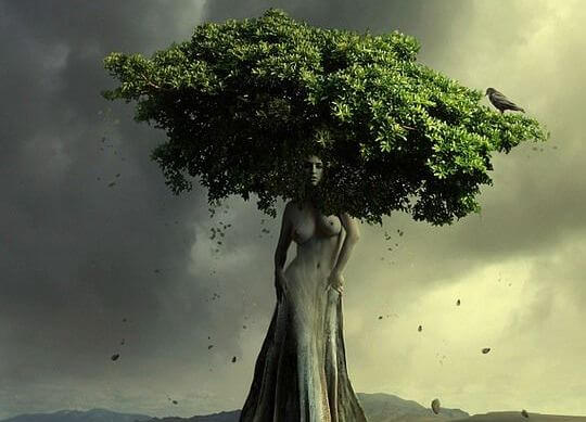 여자 모양의 나무