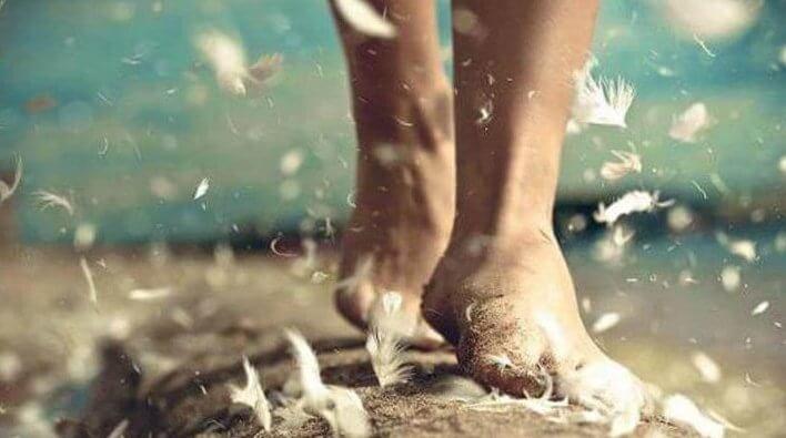 깃털에 잠긴 발
