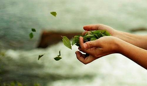 나뭇잎과 손