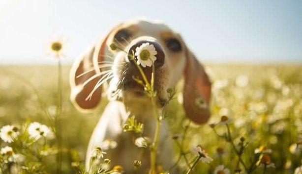 꽃 향기를 맡는 개