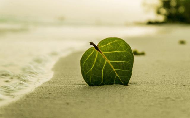 나뭇잎: 걷는 동안 명상하기