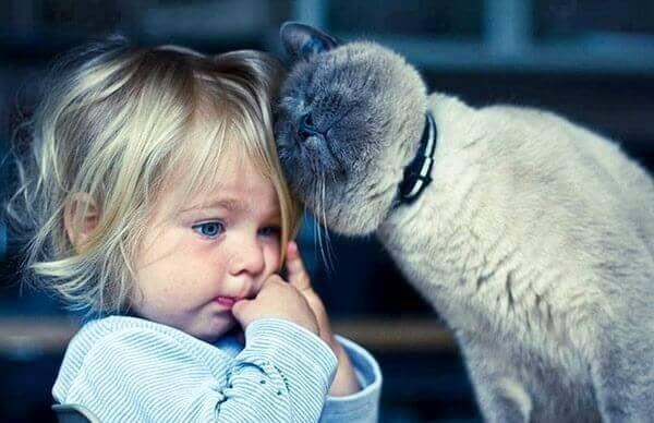고양이 테라피: 고양이와 함께 살 때 얻을 수 있는 5가지 이점