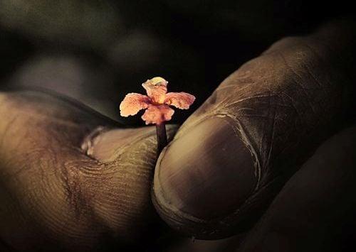 손가락 꽃