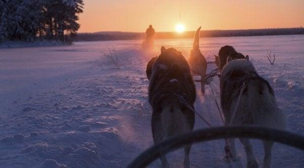 시수: 어려운 시간을 극복하기 위한 핀란드인들의 답