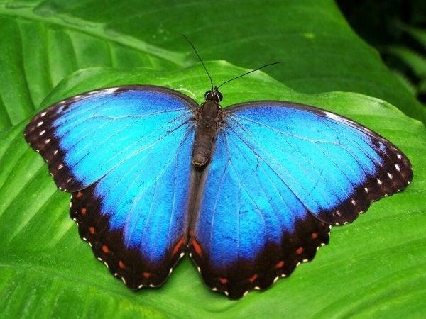 자신이 스스로를 애벌레라고 믿었던 나비의 성장 이야기