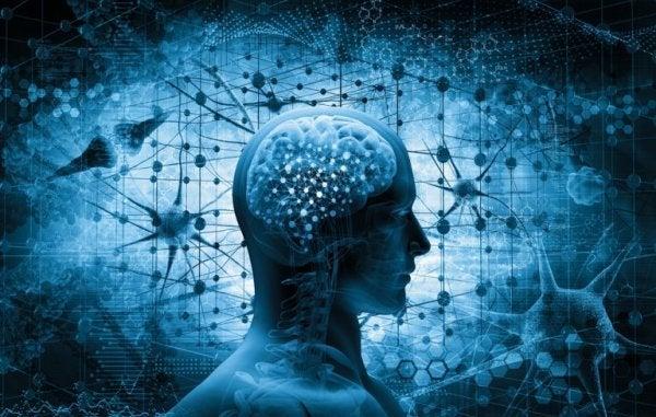 회복력의 신경학