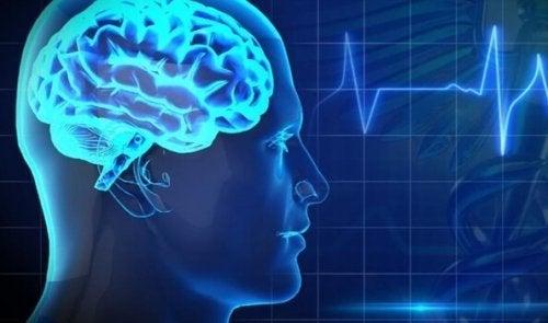 두뇌에 최악인 음식 5가지