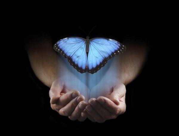 손으로부터 날아가는 나비