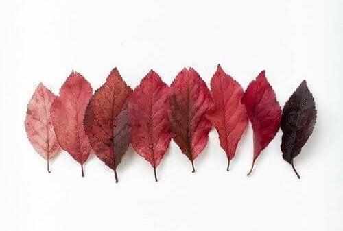 한줄 나뭇잎