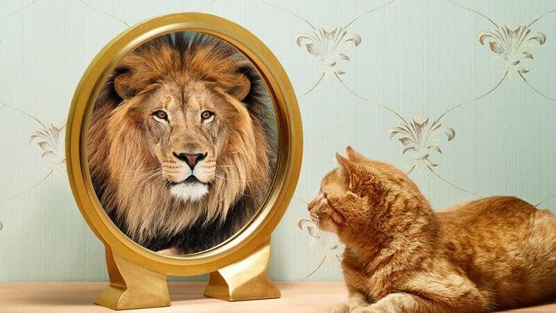 고양이가 거울에 비친 자신의 사자 모습을 보는 사진
