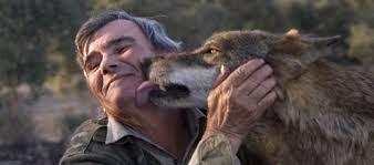 늑대가 노인의 뺨을 핥는 사진