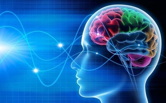 뇌파에 관하여: 알파, 델타, 세타, 감마파