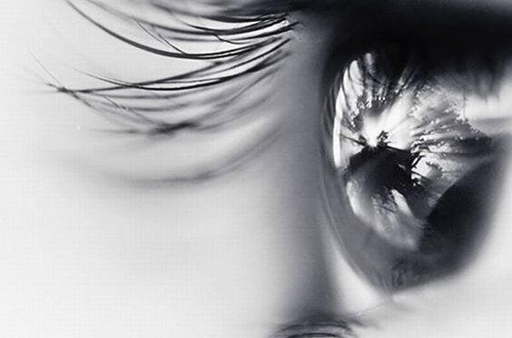 눈동자 사진