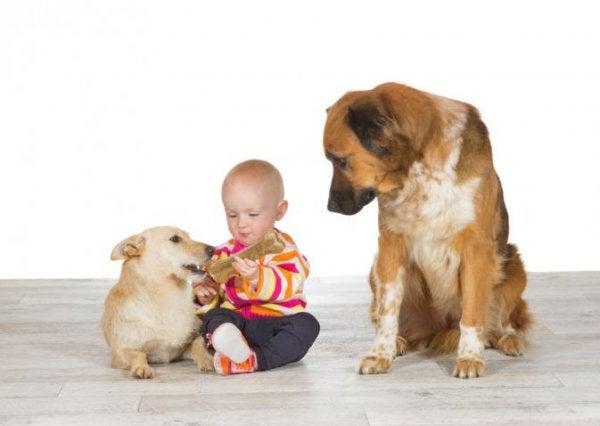 두마리 개와 한 아기의 사진