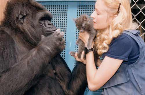 세상에서 가장 똑똑한 고릴라, 코코의 달콤한 이야기