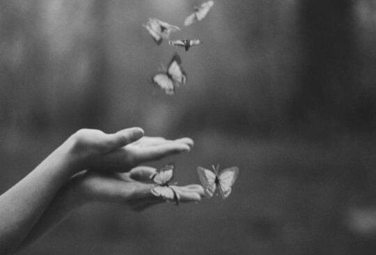손바닥 위에 날아다니는 나비 사진