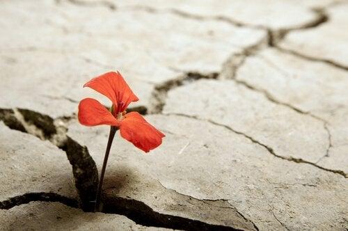 땅 균열 사이에 핀 빨간 꽃 사진