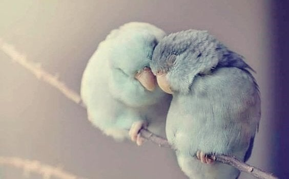 두 마리 새