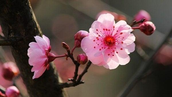 벚꽃 나무: 내적 평온에 도달하기 위한 9가지 불교 격언